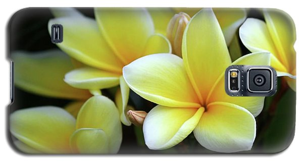 Yellow Plumeria Cascade Galaxy S5 Case