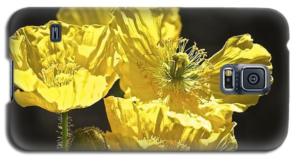 Yellow Poppies Galaxy S5 Case