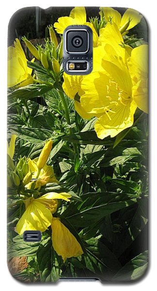 Yellow Primroses Galaxy S5 Case