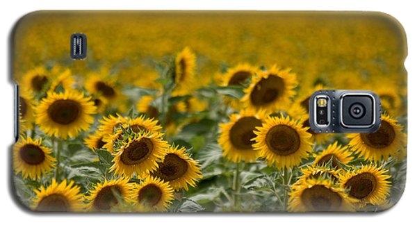 Galaxy S5 Case featuring the photograph Yellow by Ronda Kimbrow