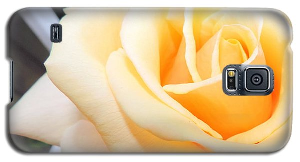 Yellow Rose And Trellis Galaxy S5 Case