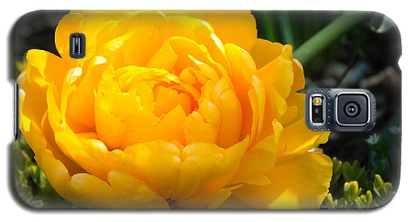 Galaxy S5 Case featuring the photograph Yellow Rose by Dee Dee  Whittle