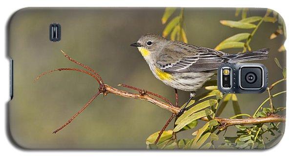 Yellow Rumped Warbler Galaxy S5 Case by Bryan Keil