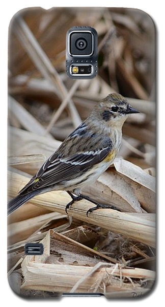 Galaxy S5 Case featuring the photograph Yellow-rumped Warbler by Debra Martz
