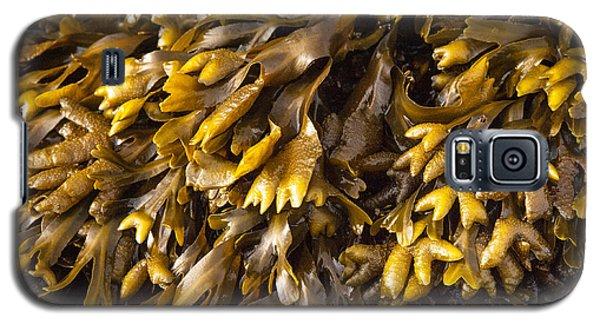 Yellow Sea Plant Galaxy S5 Case