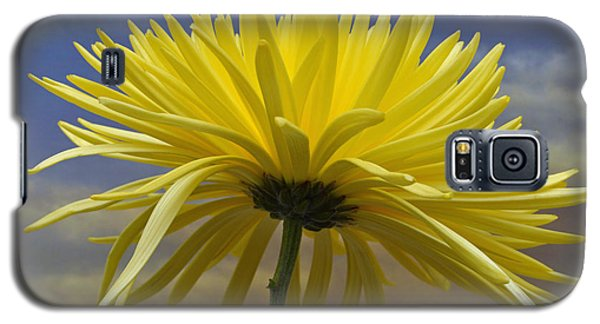 Yellow Spider Chrysanthemum Galaxy S5 Case by Terence Davis