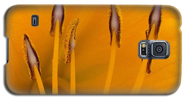 Galaxy S5 Case featuring the photograph Yellow Stamens Squared by TK Goforth