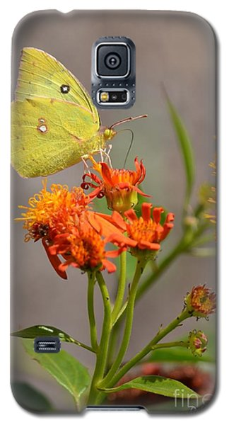 Galaxy S5 Case featuring the photograph Yellow Sulphur Butterfly by Debra Martz