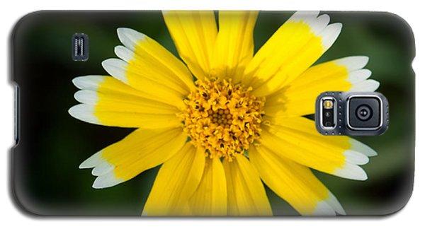 Yellow Sunshine  Galaxy S5 Case by Gandz Photography