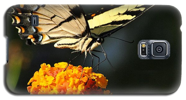 Galaxy S5 Case featuring the photograph Yellow Swallowtail by Kelly Nowak