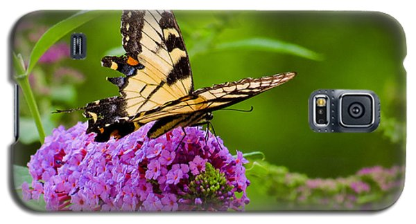 Yellow Tiger Swallow Tail Butterfly Galaxy S5 Case