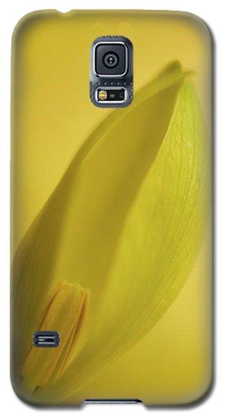 Yellow Trillium - Trillium Luteum Galaxy S5 Case