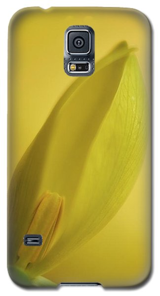 Galaxy S5 Case featuring the photograph Yellow Trillium - Trillium Luteum by Photography  By Sai