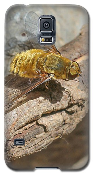Galaxy S5 Case featuring the photograph Yellow True Bee Fly - Bombiliinae by Jivko Nakev