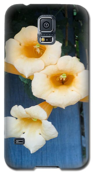 Yellow Trumpet Blooms 03 Galaxy S5 Case
