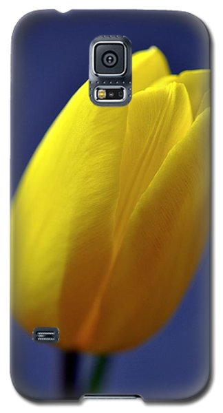 Yellow Tulip On Blue Background Galaxy S5 Case