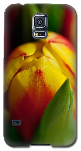 Galaxy S5 Case featuring the photograph Yellow Tulip by Sabine Edrissi