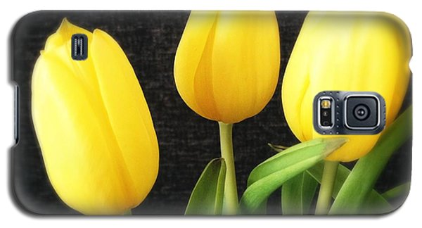 Bright Galaxy S5 Case - Yellow Tulips Black Background by Matthias Hauser