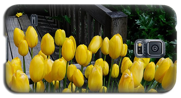 Galaxy S5 Case featuring the photograph Yellow Tulips by Haleh Mahbod