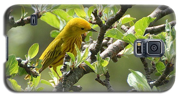 Yellow Warbler In Pear Tree Galaxy S5 Case