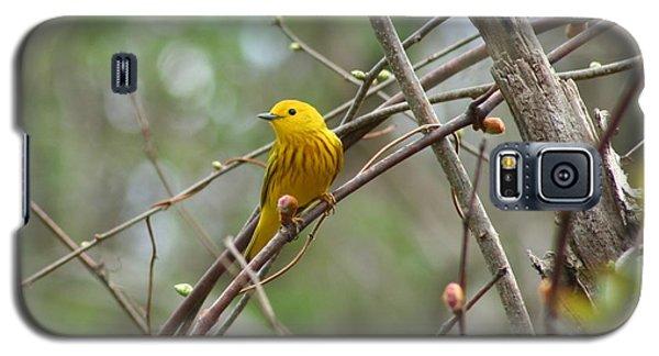 Yellow Warbler Galaxy S5 Case by Karen Silvestri