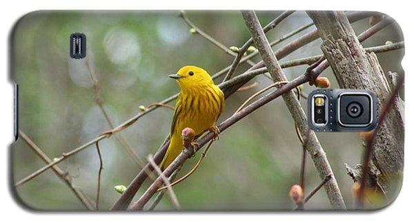 Yellow Warbler Galaxy S5 Case