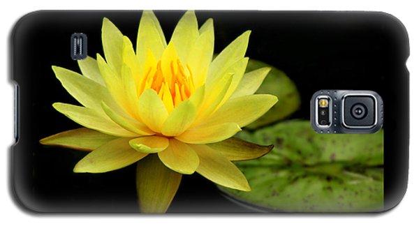 Yellow Water Lily Galaxy S5 Case by Elizabeth Budd