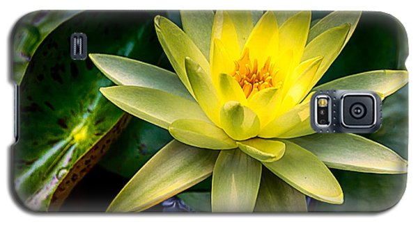 Yellow Water Lily Galaxy S5 Case