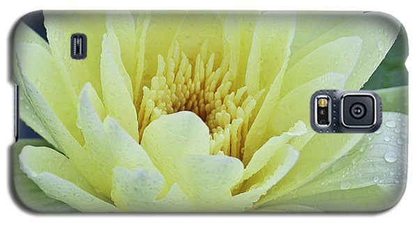 Yellow Water Lily Nymphaea Galaxy S5 Case