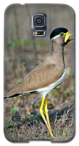 Yellow-wattled Lapwing Vanellus Galaxy S5 Case