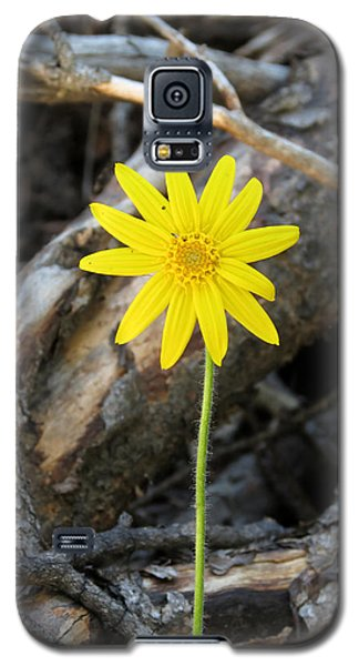 Galaxy S5 Case featuring the photograph Yellow Wildflower by Laurel Powell