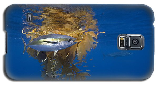 Yellowfin Tuna And Kelp Nine-mile Bank Galaxy S5 Case