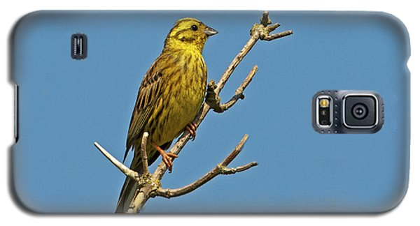 Galaxy S5 Case featuring the photograph Yellowhammer by Paul Scoullar