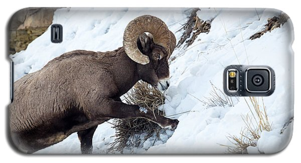 Yellowstone Bighorn Galaxy S5 Case