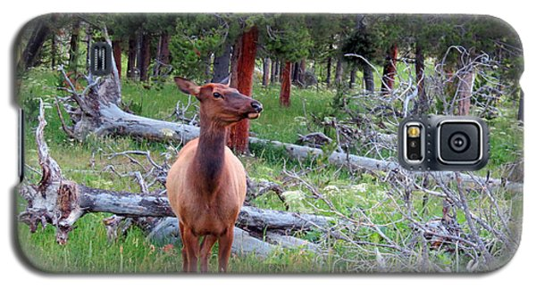 Yellowstone Moments. Doe Galaxy S5 Case by Ausra Huntington nee Paulauskaite