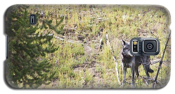 Yellowstone Wolf Galaxy S5 Case by Belinda Greb