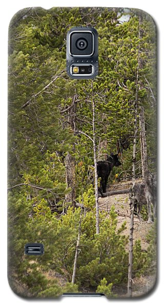 Yellowstone Wolves Galaxy S5 Case by Belinda Greb