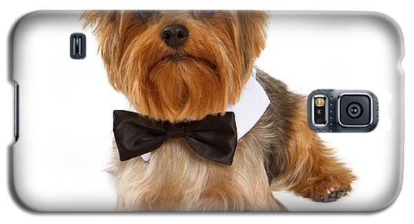 Yorkshire Terrier Dog With Black Tie Galaxy S5 Case