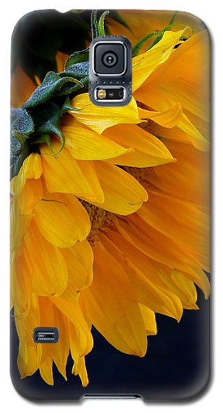 Galaxy S5 Case featuring the photograph You Are My Sunshine by Brenda Pressnall
