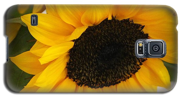 You Are My Sunshine - Greeting Card Galaxy S5 Case by Dora Sofia Caputo Photographic Art and Design