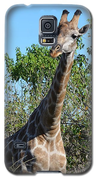 Galaxy S5 Case featuring the photograph You Called by Allan McConnell