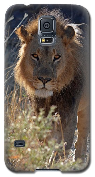 Galaxy S5 Case featuring the photograph You Want Trouble by Allan McConnell