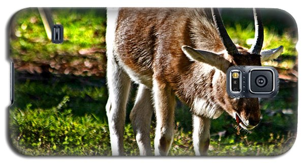 Youngster Addax Galaxy S5 Case