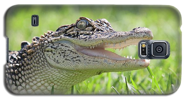 Young Alligator With Mouth Open Galaxy S5 Case by Piperanne Worcester