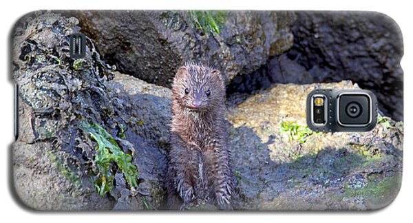 Galaxy S5 Case featuring the photograph Young American Mink by Peggy Collins