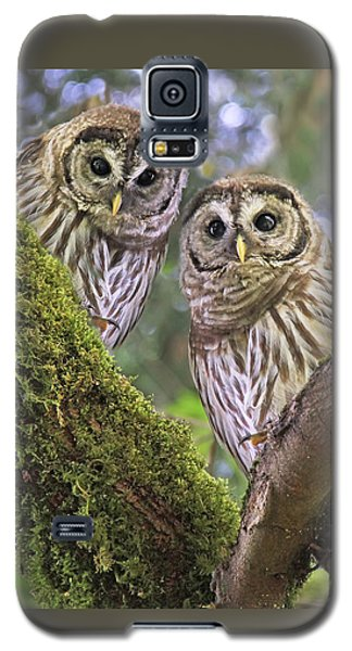 Young Barred Owlets  Galaxy S5 Case