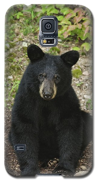 Young Bear 1 Galaxy S5 Case