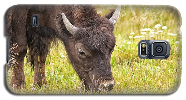 Young Bison Galaxy S5 Case by Belinda Greb