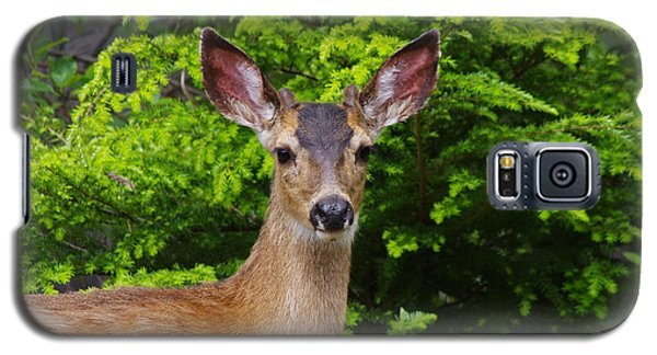 Galaxy S5 Case featuring the photograph Young Buck by Adria Trail