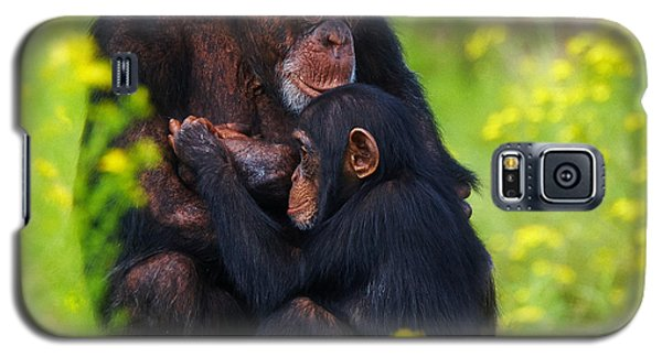 Galaxy S5 Case featuring the photograph Young Chimpanzee With Adult - II by Nick  Biemans